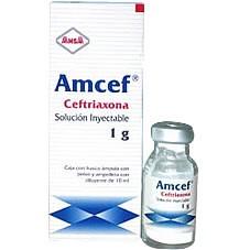 Amcef - Prospecto, efectos adversos, preguntas frecuentes